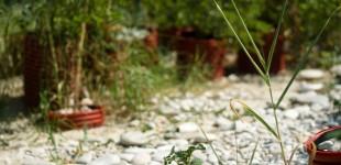 Lineattiva / linea C // Giardino Sommerso